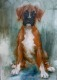 boxer opsite (5)