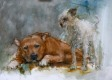 doggie (11)