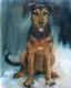 doggie (14)