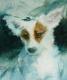 doggie (9)