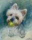 doggie (1)
