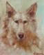 doggie (16)